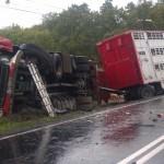 Czołowe zderzenie ciężarówki do przewozu zwierząt oraz auta osobowego – dwie osoby nie żyją